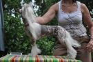 Chily Red Rock from Kranar Chinese Crested